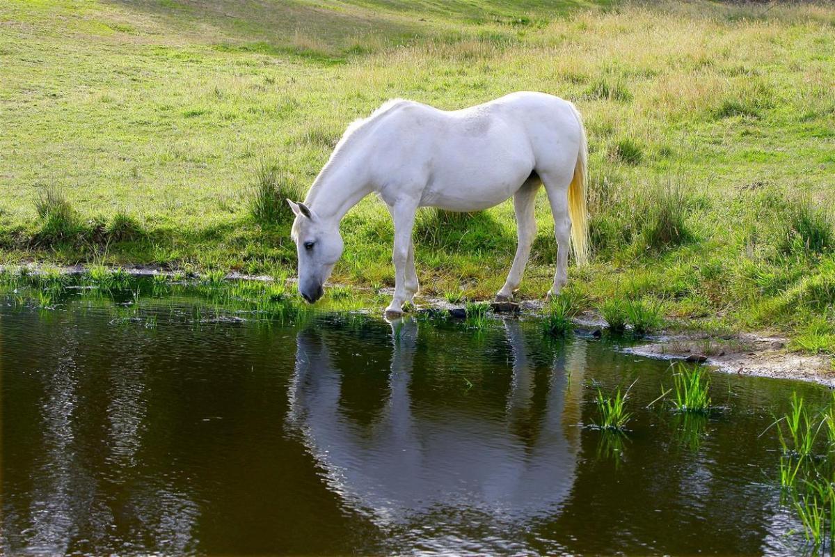 horse-51733_1920_0.jpg